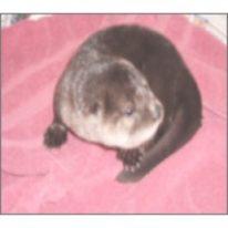 Charlie The River Otter